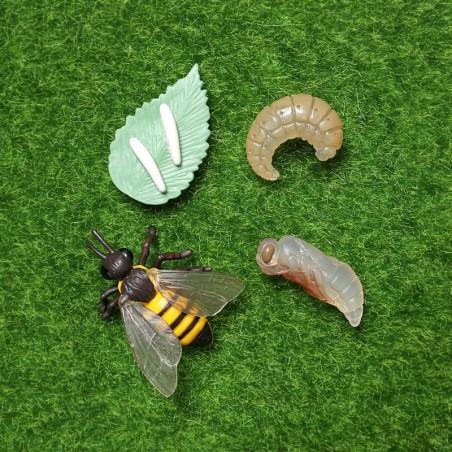 ensemble de 4 Figurines éducatives cycle de croissance d'une abeille