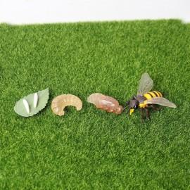 Figurines éducatives cycle de croissance de l'abeille