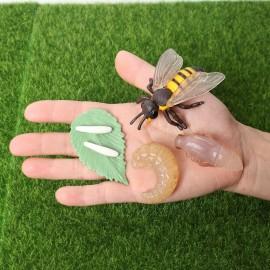 Figurines éducatives cycle de croissance d'une abeille