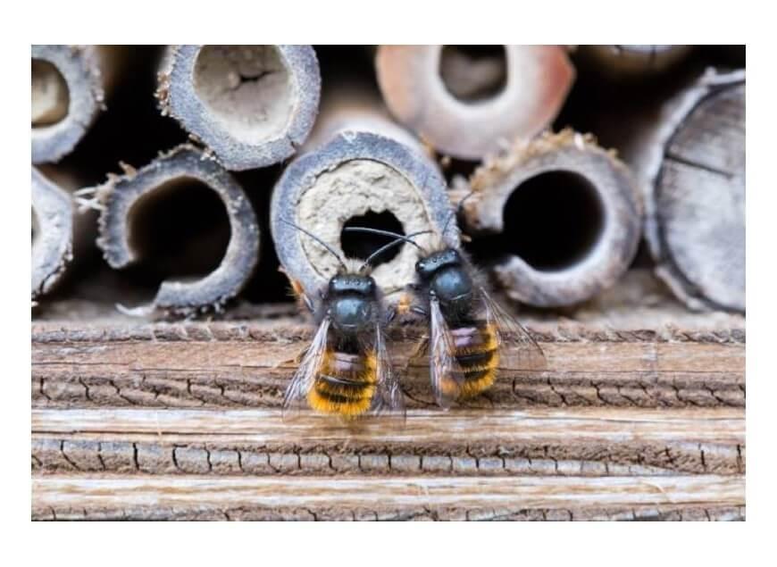 Est-ce qu'une abeille meurt après avoir piqué ?