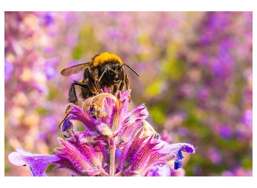 Nid de guêpes ou essaim d'abeilles ? Comment réagir ?
